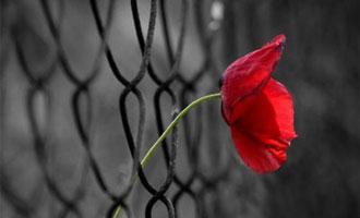 حد و مرز آزادی